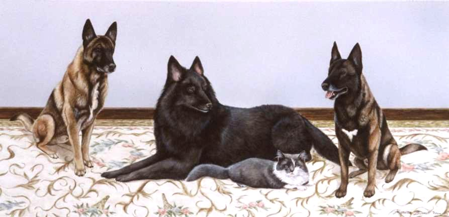 2 Belgian Malanois-Belgian Sheepdog-Cat